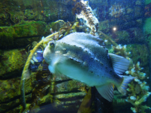 Fish at Macduff Marine Aquarium