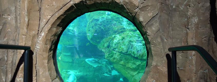 View into tank at Macduff Marine Aquarium