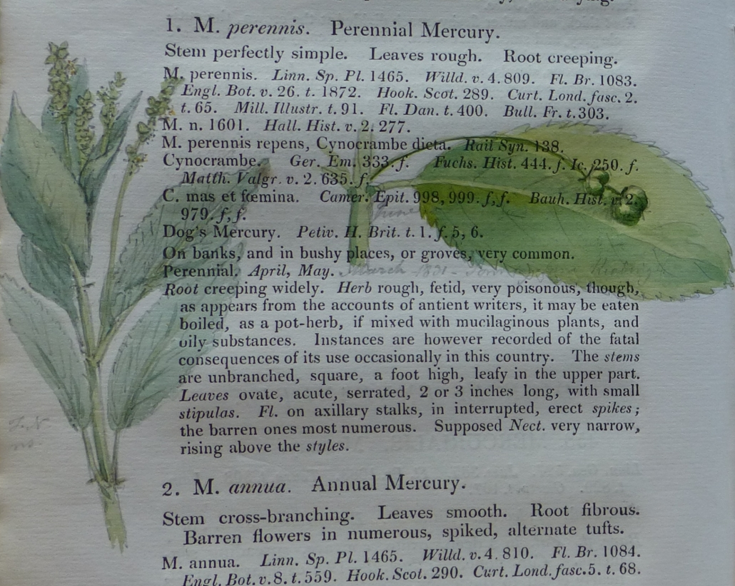 Colour image of a plant painted over text in a book